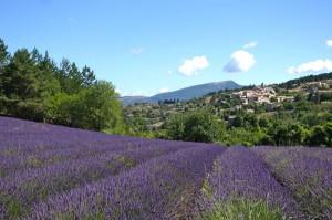 Aurel, Frankreich