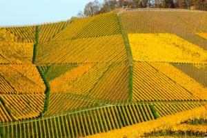 Weinberge bei Ortenberg