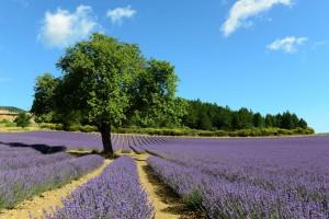 Nähe Aurel, Frankreich